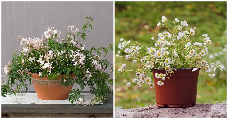 Indoor Plants Help Relieve Stress In Your Home