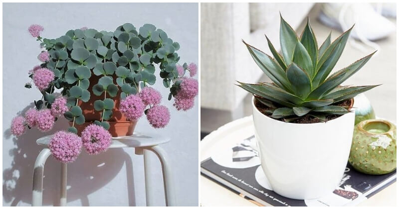25 Beautiful and Unique Blue Succulents To Add Color On Decorating Your Home