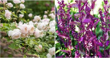 20 Glorious Plants for an Edible Front Yard