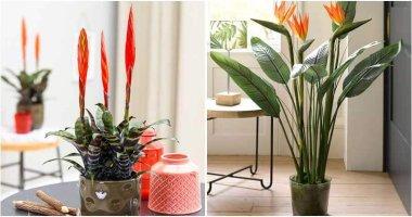 Stunning Straight Plants To Grow Indoors
