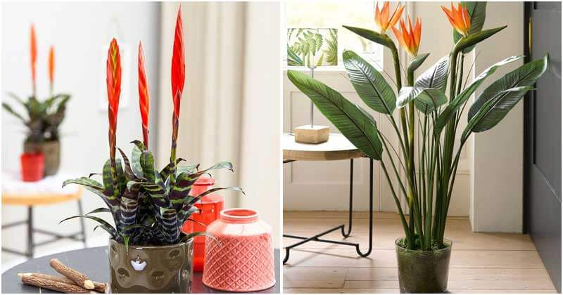 Stunning Straight Plants To Grow Indoors