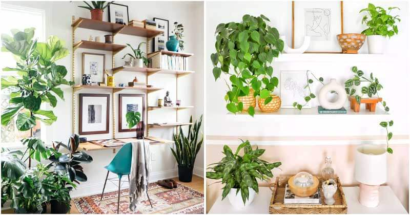 22 Perfectly Styled Plant Shelf Ideas To Decor Your Home