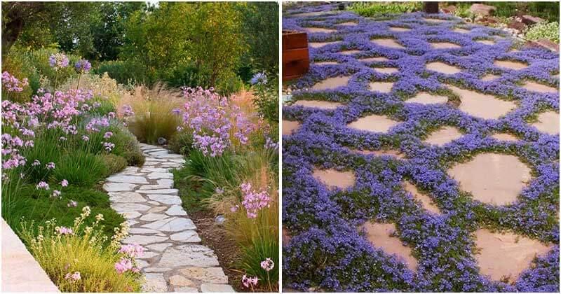 22 Appealing Purple Flowering Groundcovers