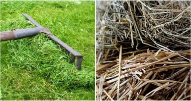 The Best Mulches Are Good For Your Garden