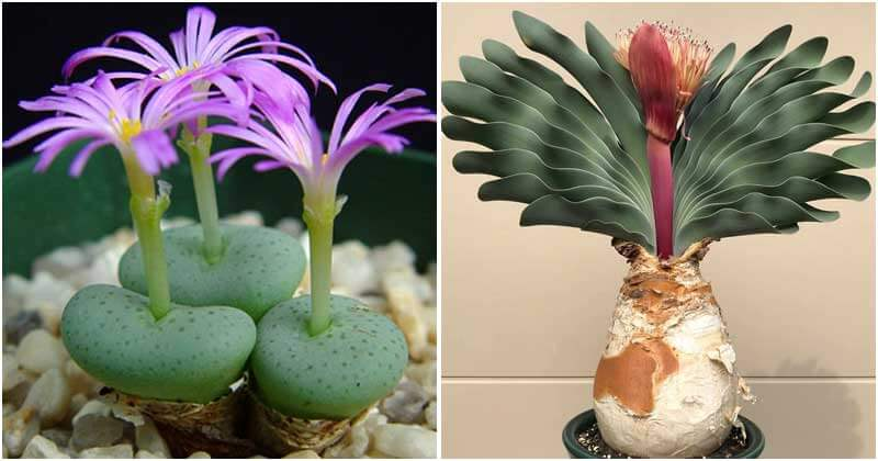17 Succulents That Don't Need Water During A Month