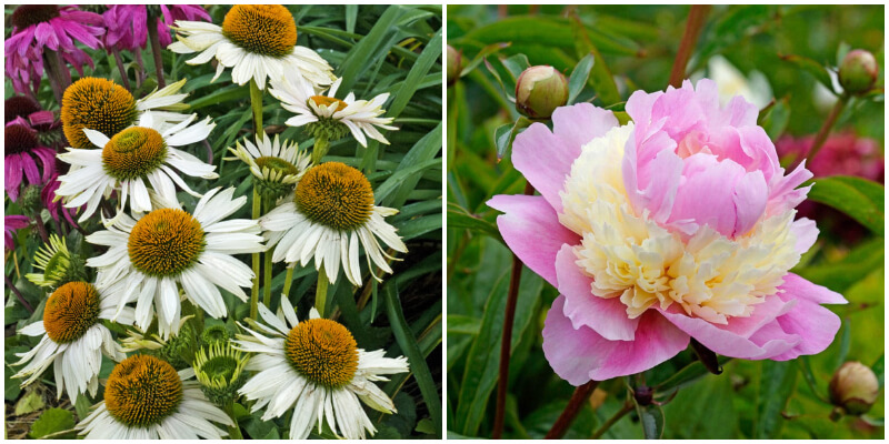 32 Most Fragrant Perennials For Your Dreamy Garden