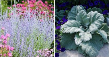 Beautiful Silver Foliage Plants To Brighten Up Your Yard