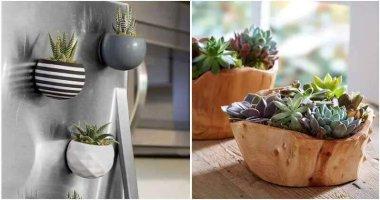 23 Eye-Catching Indoor Succulent Garden Ideas