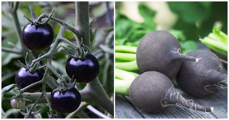 Unique Black Vegetables To Grow In The Garden