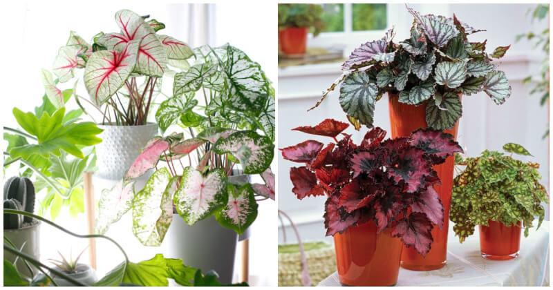 Best Outdoor Plants Grow Well Indoors