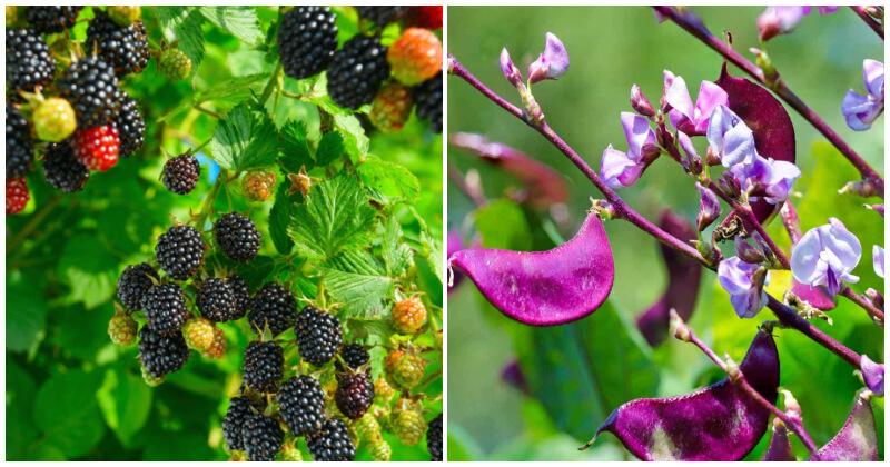 Edible Vines To Grow In Small Garden