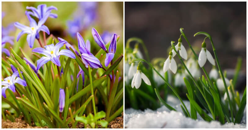24 Winter Flowers To Add Vibrant Color To The Garden