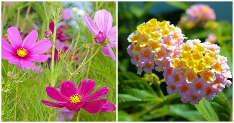 15 Full Sun Annual Flowers For Your Summer Garden