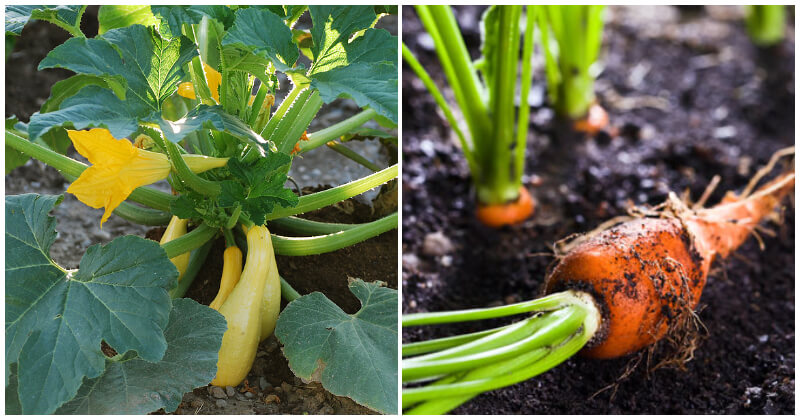 15 Companion Vegetables and Herbs To Grow Together