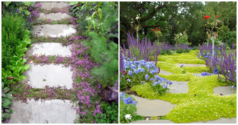 15 Best Walkable Groundcovers That Are Perfect For Your Garden Path