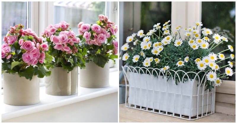 Shimmering Indoor Mini Flower Garden Ideas To Place On Your Windowsill