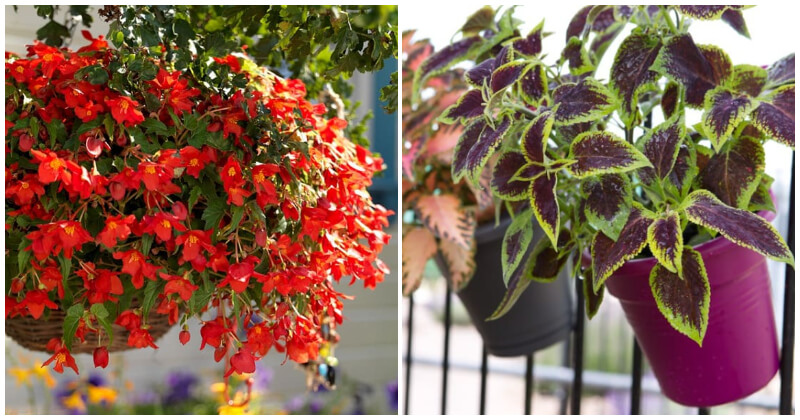 23 Beautiful Flowers and Plants To Grow On Your Balcony Garden