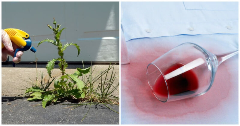 Awesome Ways To Use Leftover Wine In Your Garden And Home