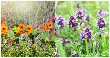 16 Edible Ground Cover Plants