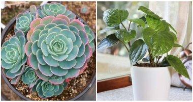 The Best Indoor Plants Reduce Radiation