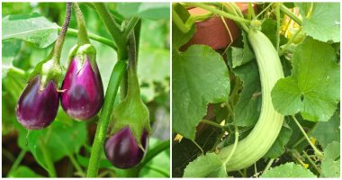 Super Delicious Asian Vegetables To Grow In Your Garden