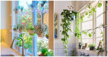 Inspiring Pictures of Indoor Plants Place On The Kitchen