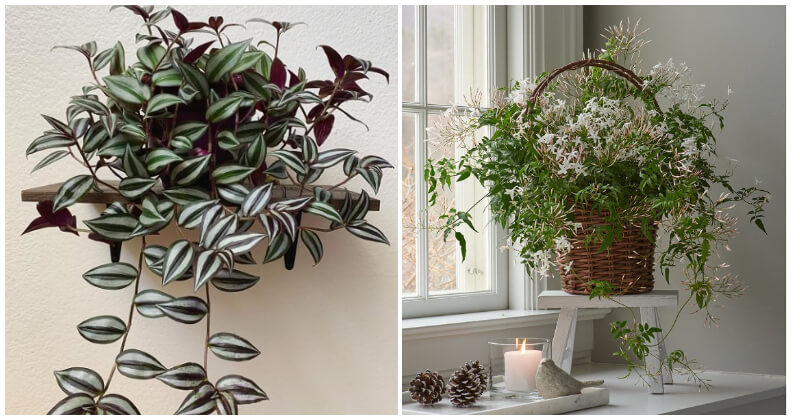 The Best Beautiful Vines and Climbers You Can Grow Easily Indoors