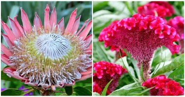20 Beautiful Flowers With The Biggest Blooms For Your Yard