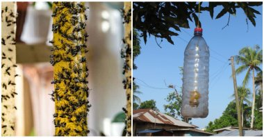 Effective Natural Pest Traps For Your Healthy Organic Garden