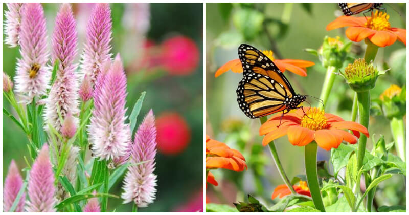 29 Beautiful Summer Flowers to Add Your Garden
