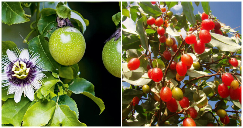 26 of The Best Cold Tolerant Fruit Trees To Grow in Your Garden