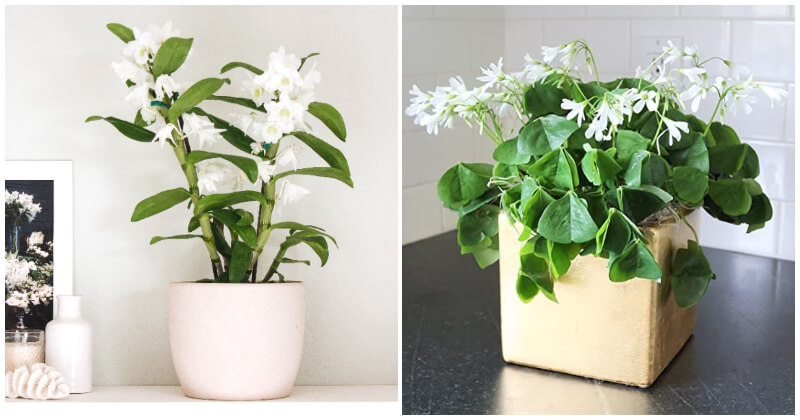 Indoor Plants Produce Beautiful White Flowers To Your Home