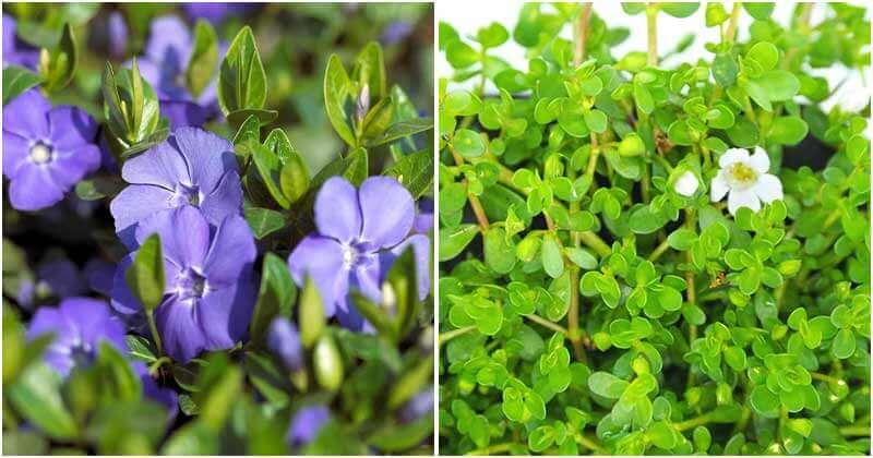 17 Plants That Can Improve Your Memory and Concentration