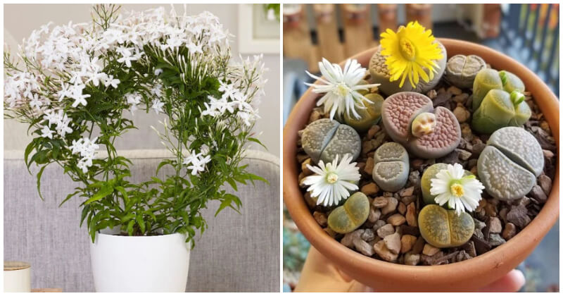 The Best Of 15 Pretty Houseplants Are Safe For Your Kids