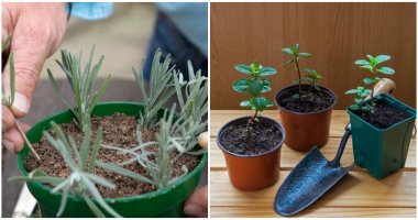 13 Herbs That You Can Grow From Cuttings