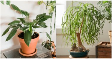 14 Houseplants That Grow Well Without Needing Water For A Month