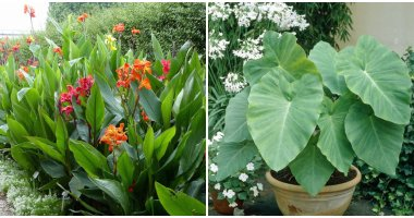 18 Stunning Tropical Plants To Grow In Your Yard