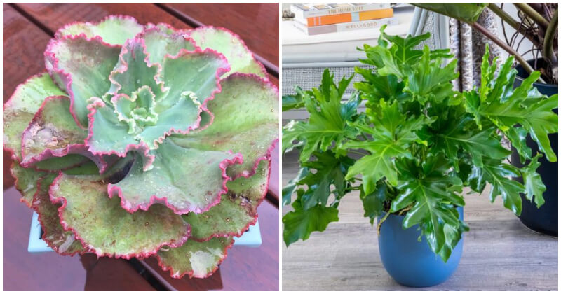 14 Cut Foliage Houseplant Varieties To Give Your Home A Fanciful Beauty