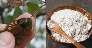 9 Natural Ways To Repel Japanese Beetles From The Garden