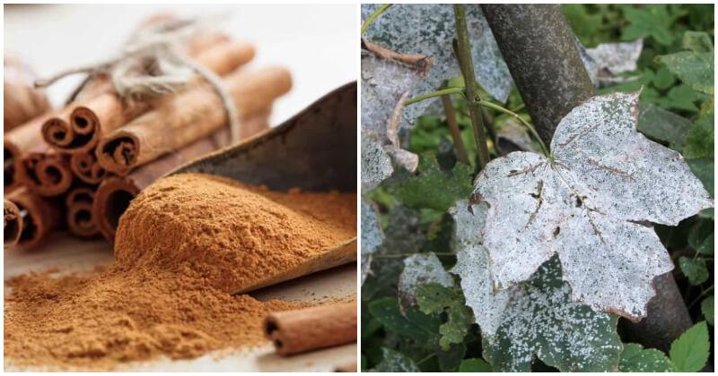 11 Amazing Cinnamon Uses In Your Garden