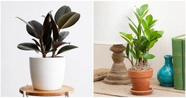 The Best of 7 Indoor Plants Reduce Dust