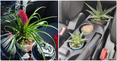 9 Plants That You Can Grow In Your Car