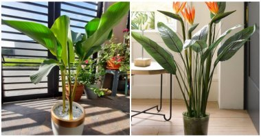 9 Houseplants That Look Like A Banana Tree To Bring Tropical Space