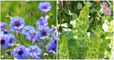 14 Easy to Grow Cut Flowers For Beginners