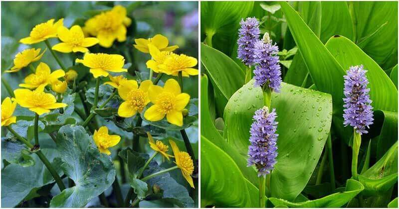 21 Flowers and Plants For Wet and Soggy Soil