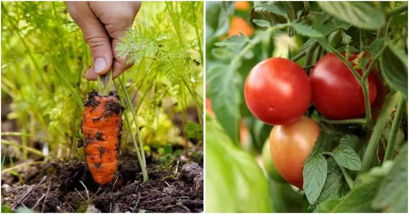The Collection of 10 Fastest-Growing Vegetables In India