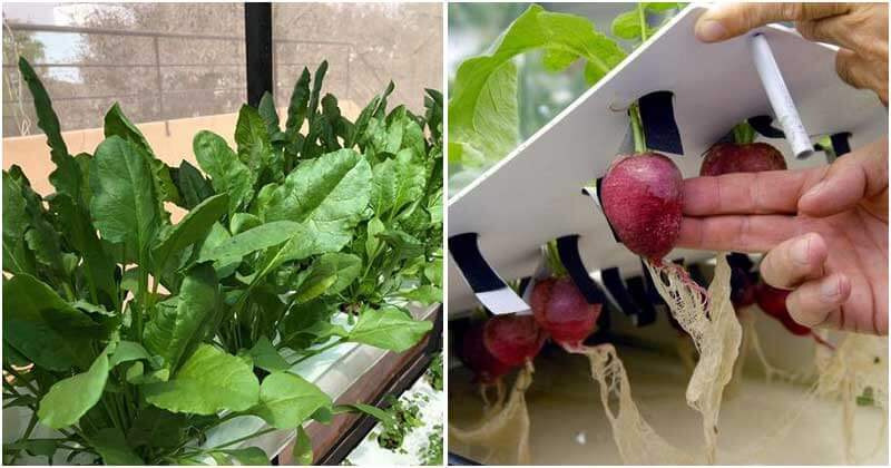 10 Vegetables That You Can Grow With Hydroponics