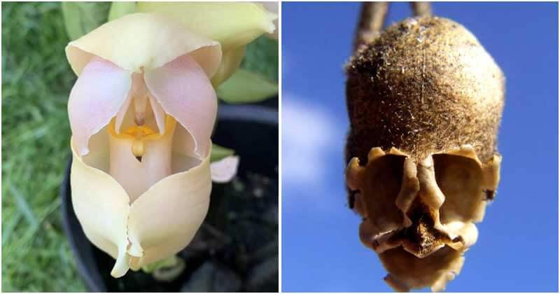 11 Rare Flowers Look Like Something Things