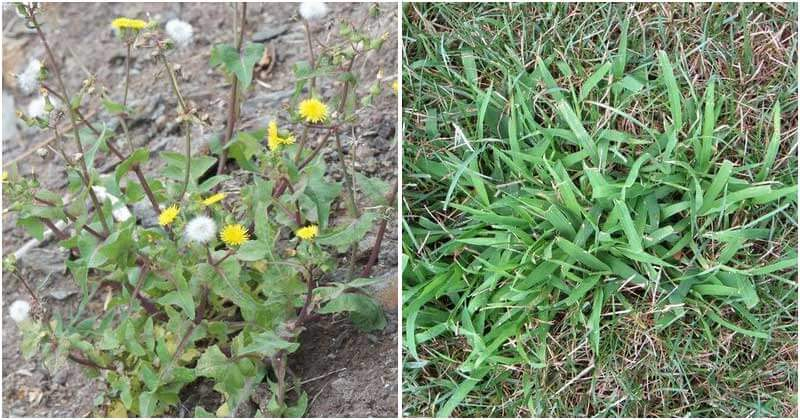 6 Common Weeds and Effective Ways To Control Them In Your Garden