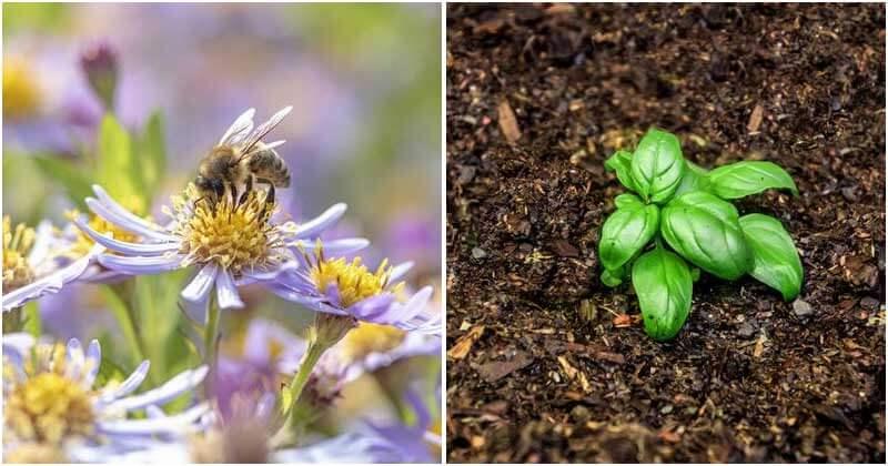 11 Effective Organic Pest Control Methods In Garden